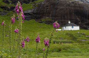 Loch Coruisk Memorial Hut through flowers